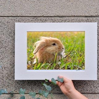 Limited rabbit photography art original - thought