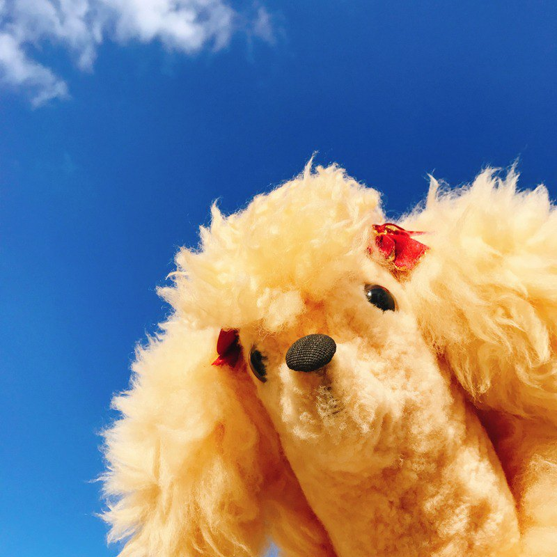 Australia imported handmade pure wool warm yellow poodle | doll ornaments old rare
