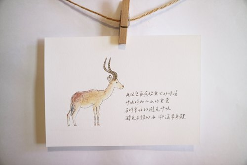 Animals with its poetry 40 / antelope / hand-painted / card postcard