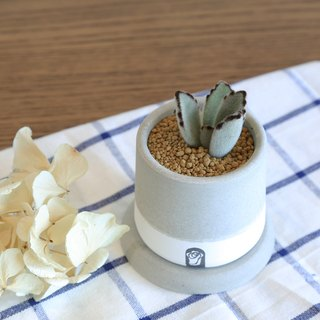 Small well two-color succulent plant cactus cement hand-made potted plants containing plants / rabbit ears