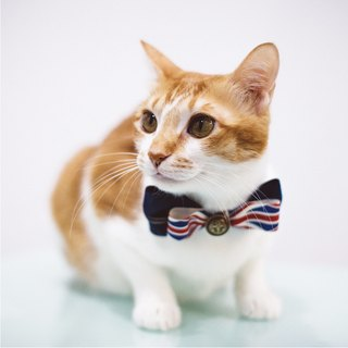 :toPET Handmade - Bowtie - For Pets (M Size)
