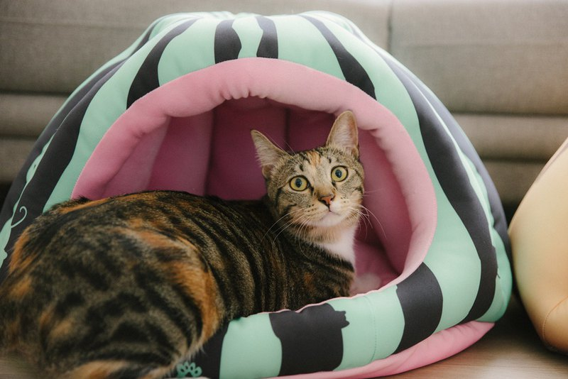 Big warm house-cat ran to the watermelon field cat nest pet bed pet sleeping mat