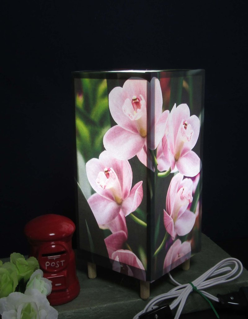 Phalaenopsis orchid peace 【Shilla elephant】 Medium · LED dream light The best part of light stand!