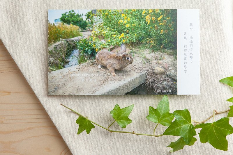 Rabbit Photography Illustration Postcard - Rustic Style