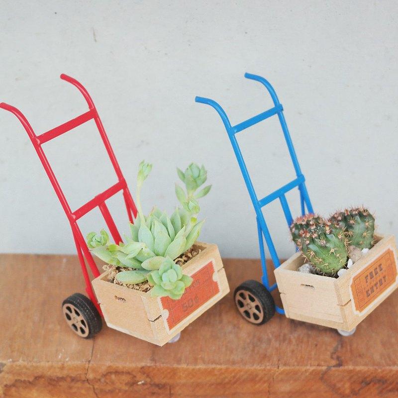 荳荳多肉植物與小雜貨-可愛雙輪車多肉植栽組合