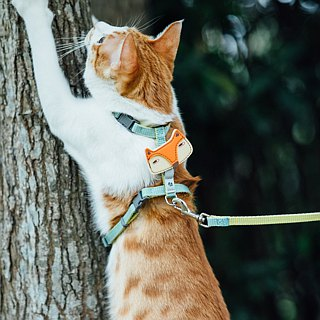 Tail with me】 【classic nylon rope with cats series Mint lemon yellow
