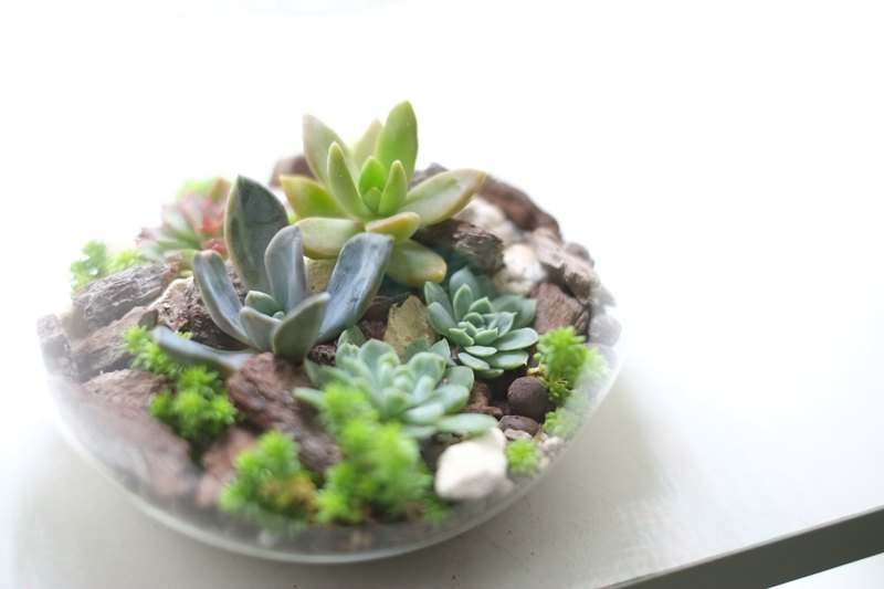 LED glass microview-succulent pot eco bottle home night light