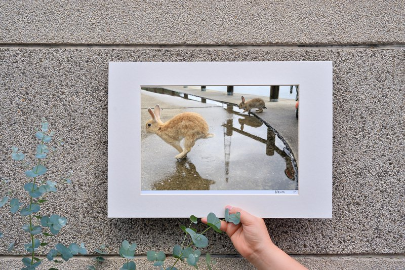 Limited rabbit photography art original - chasing ‧