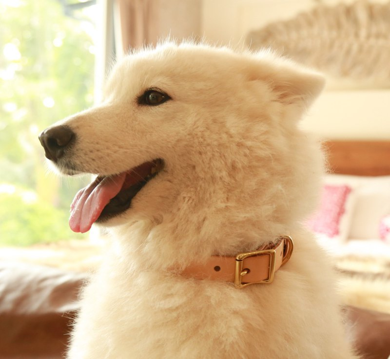 Dog collar, leather collar, dog