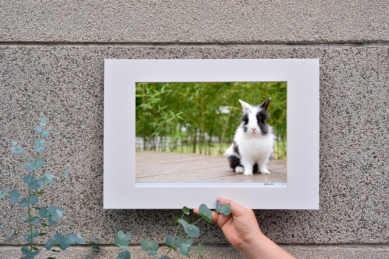 Limited Rabbit Photo Art Original - Face