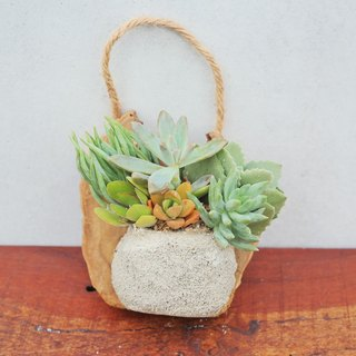 Peas succulents and small groceries_Creative planting series unique works - clay wall hanging 2