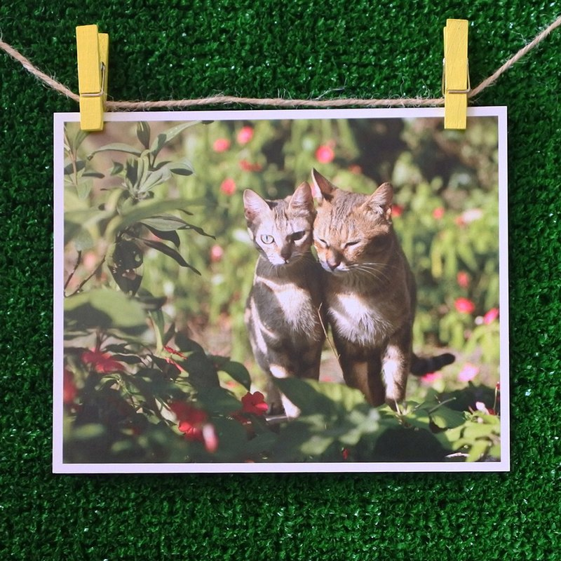 Cat's photo postcard