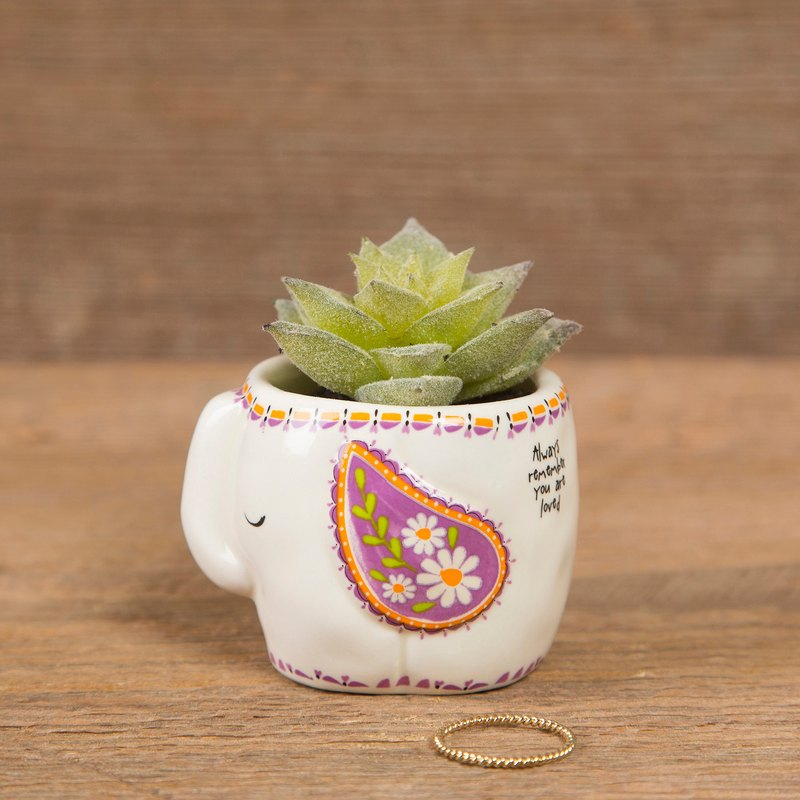 Animal shape succulent potted plants - elephant | PLNT014