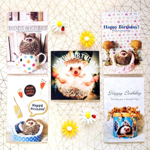 5 hedgehog birthday card Set, Funny Birthday card, Hedgehog craft, Hedgehog print, Hedgehog photos, Hedgehog picture, Cute hedgehog photos