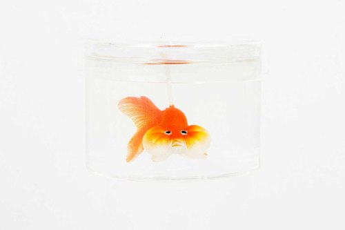 Bubble eye goldfish candle