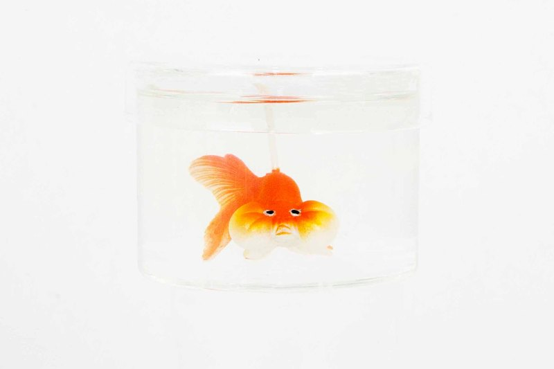 Bubble Eye Goldfish Candle - orange 300ml