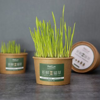 Fresh cat grass [barley x wheat]