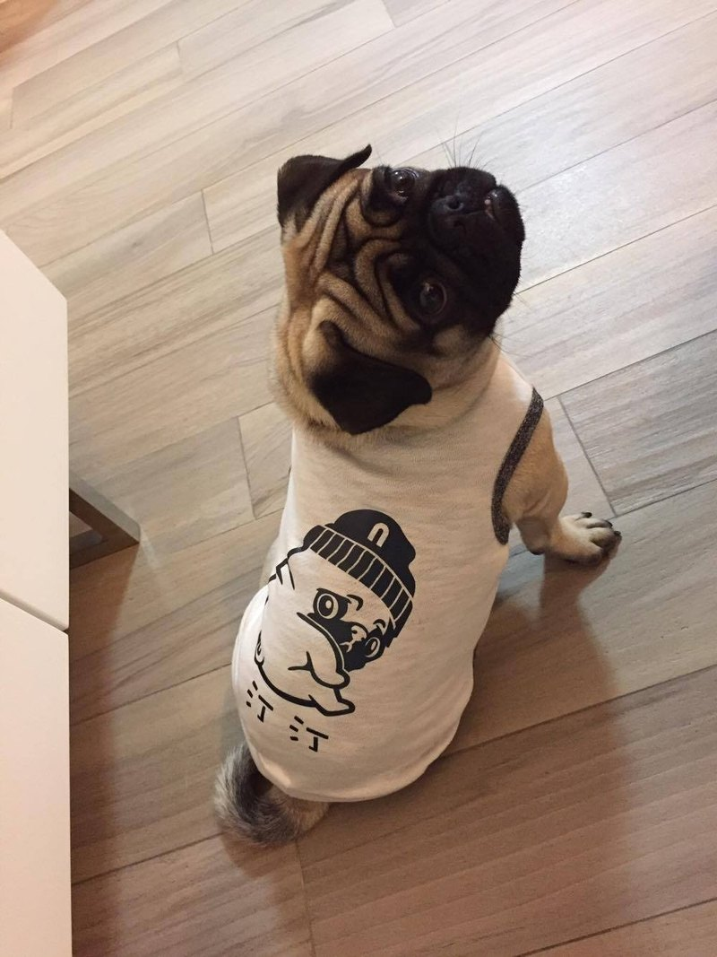 Dog Reflective Clothes--PUG, customized design