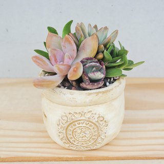 Peas succulents and small groceries - European flower succulent plant combination
