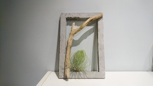 Cement frame (with driftwood & air pineapple)
