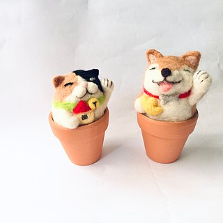 Lucky Fortune _ Wangcai and Lucky combination Shiba Inu Cat Lucky Fortune New Year Happy Gasucopia