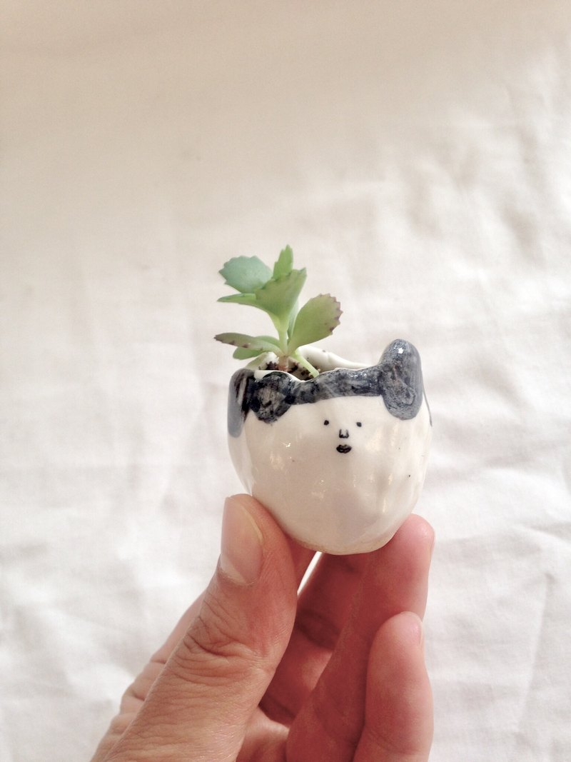 Ultra-small face mini potted - indoor plant desk small meat