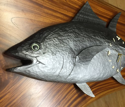 Hatch clock of bluefin tuna