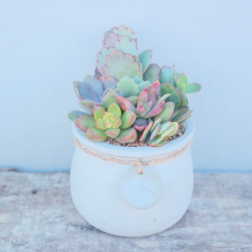 Peas Succulents and Small Groceries - Handmade clay handle with the series - Amoy Tao _ cement color