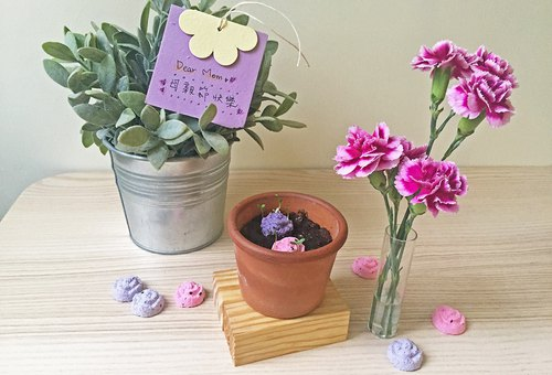 [New]Carnation Seed Ball Planting Set