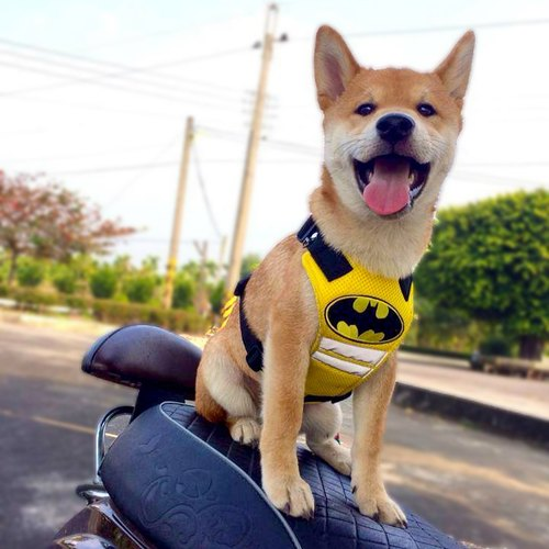 9 ~ 20kg medium-sized dog Batman Harnesses