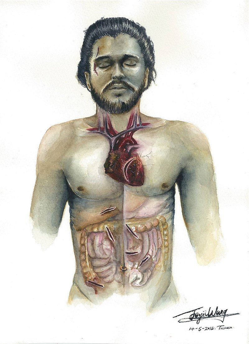 Anatomical medical art: you know nothing Jon Snow