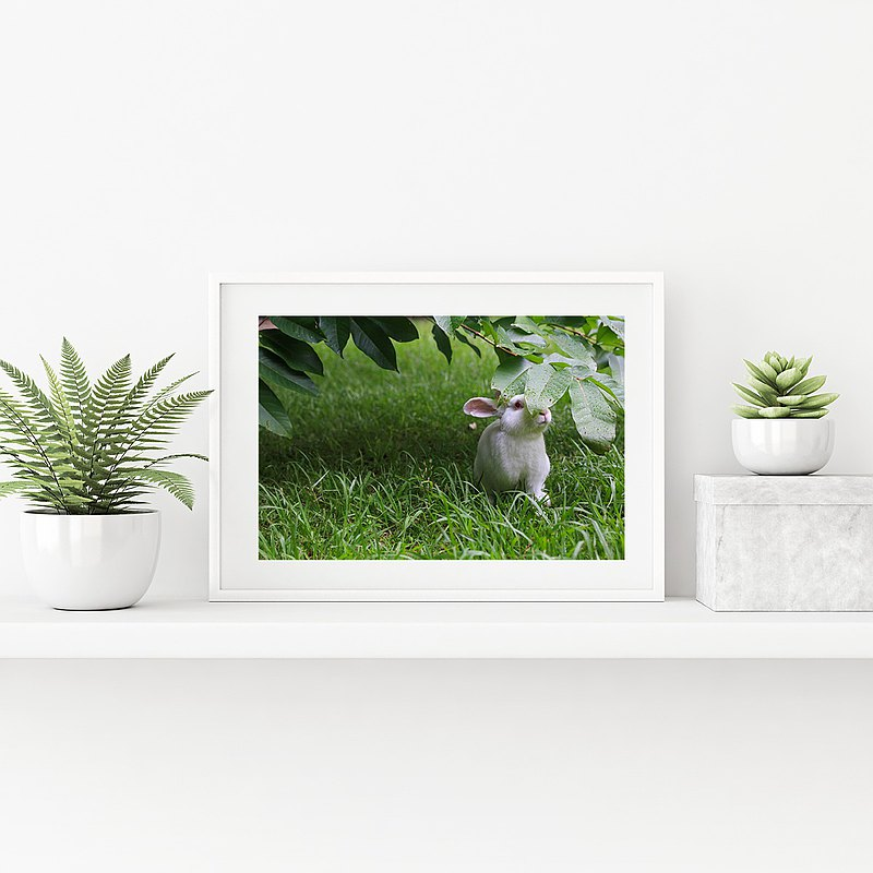 Original limited edition rabbit photography art-Summer Secret Ruby
