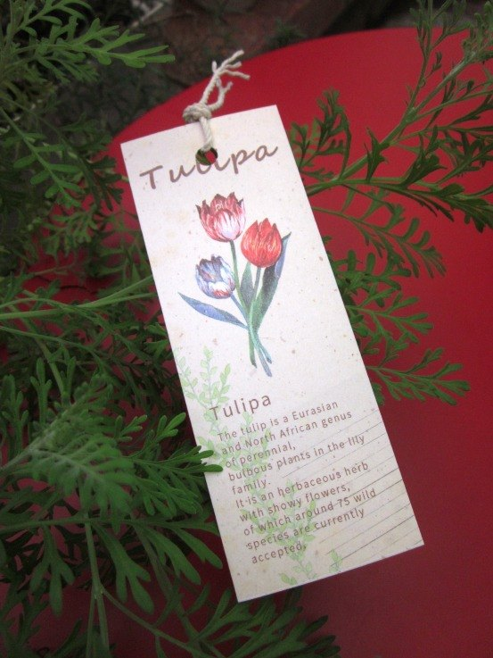 ☁ Bookmarks - Tulip Worship