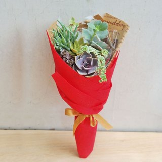 Beans beans succulents and small groceries _ Creative Planting Series - juicy bouquets (small)