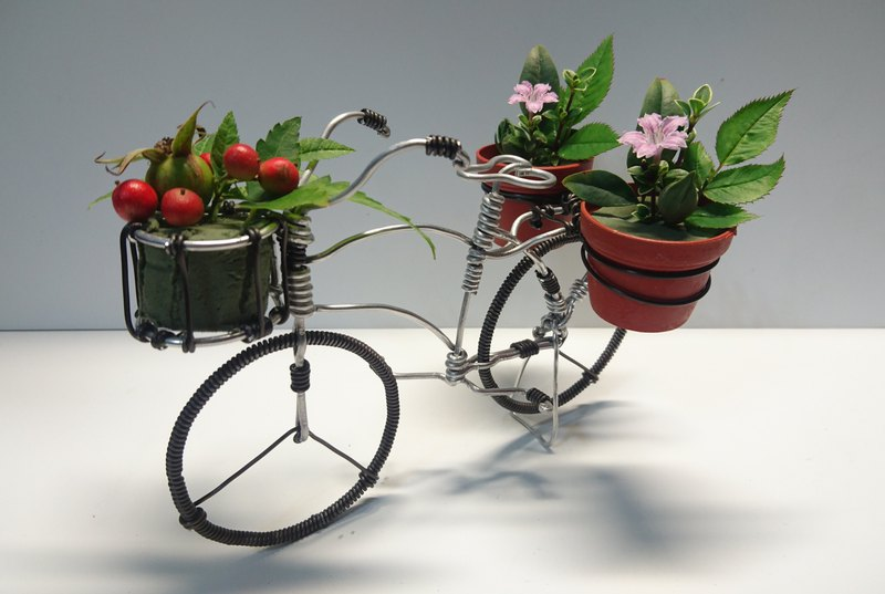Aluminum line bicycle - retro ladies bicycle (multi-plant)
