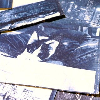 Cyanotype postcards cyanotype postcard (cat)