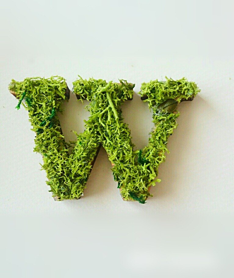 "Wooden alphabet objects (Moss) 5cm ""W"" × 1 point"