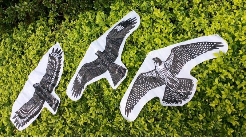 MIT Taiwan eagle to fly kite _ Peregrine falcon, snake carving, black kite three optional