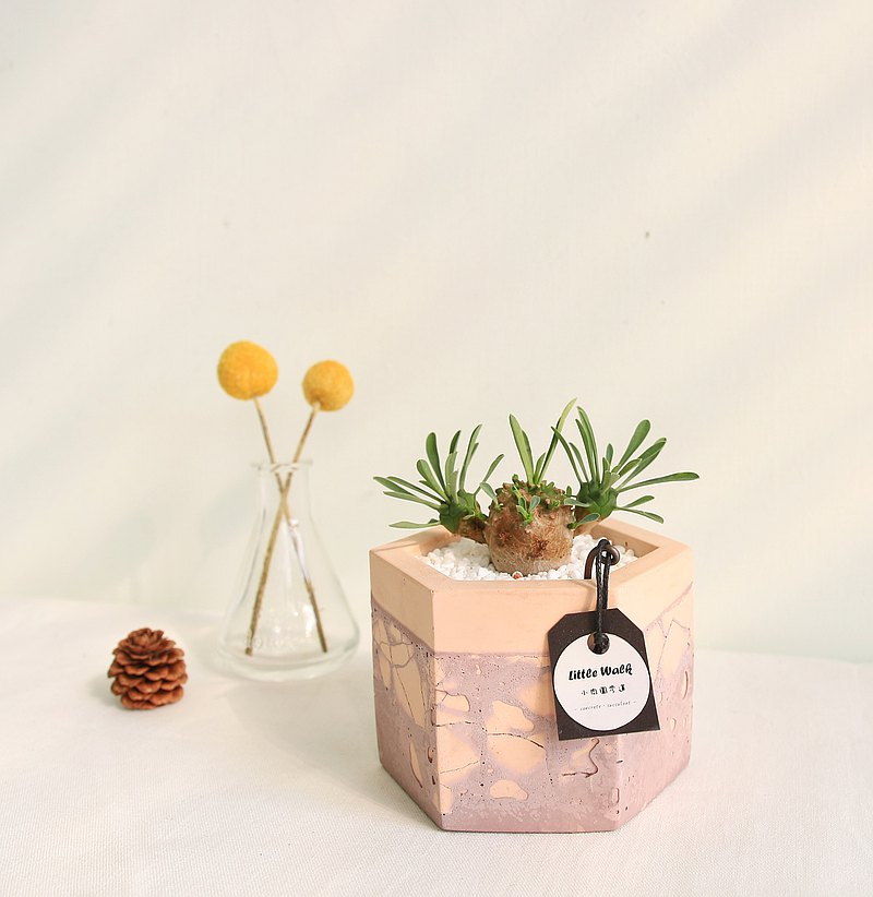Emeishan mud art cracked cement potted plant can be customized name Mother's Day gift birthday gift