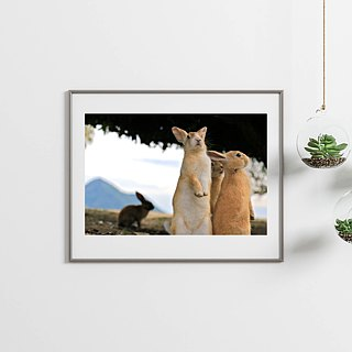 Limited rabbit photography art original - beings