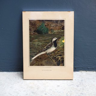 Early bird illustrations, framed wall paintings have been framed