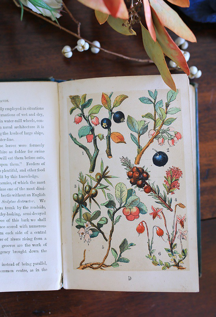 // British fruit and flower antique book // Hot stamping hard hand drawn