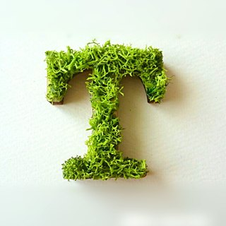 "Wooden alphabet objects (Moss) 5cm ""T"" × 1 point"