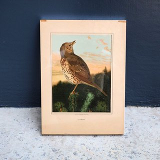 Early bird illustrations, frame wall paintings, framed D