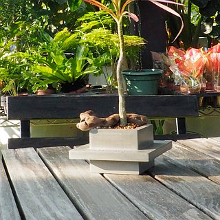 GREENOLOGY Cement square belt planter (small)