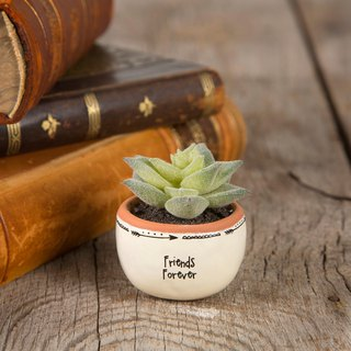 Hand-painted style mini succulent potted-Friends | PLNT003
