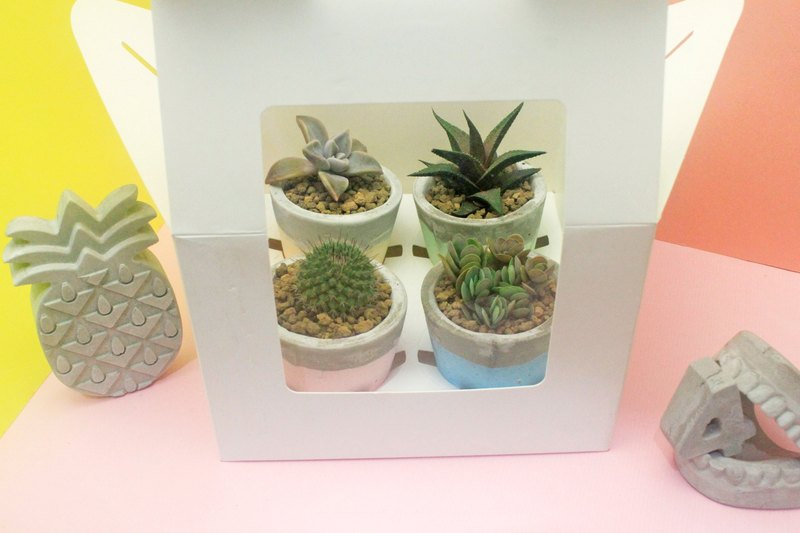 Valentine's Day DIY gift box -4 pots 4 succulents
