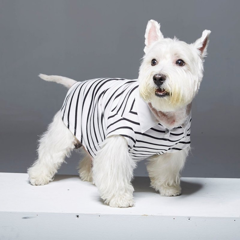 Striped shirt collar POLO pet clothes - widened version
