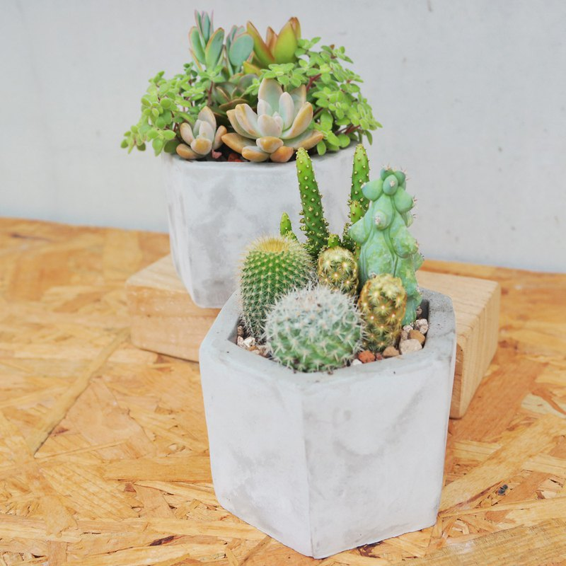 Peas succulents and small groceries - hexagonal mud pot planting combination
