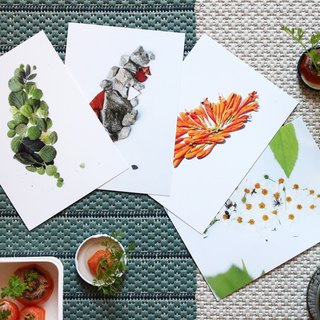 TAIWAN IS MADE OF TAIWAN Flower and Stone Postcard Set of 8 Groups